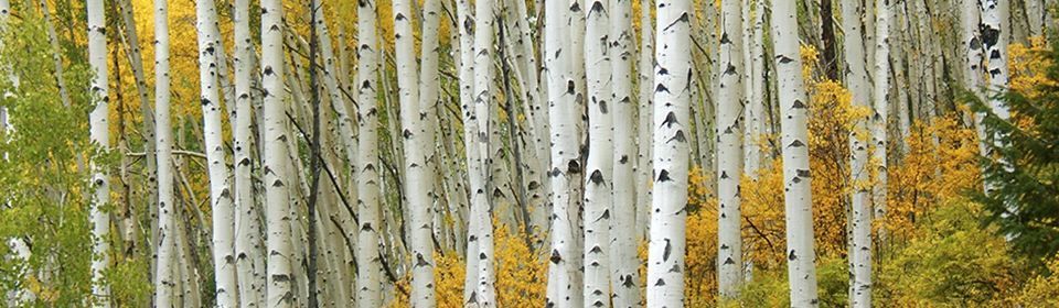 HSHeaderAutumnTrees_cropped