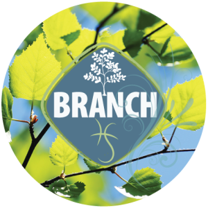 BRANCH design discovery process